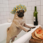 8 Instagram-Famous Dogs You Should Be Following